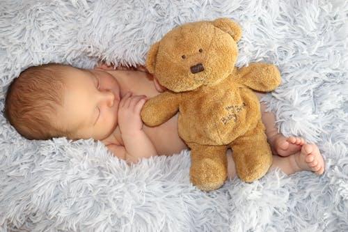 Free stock photo of baby, baby bear, baby boy
