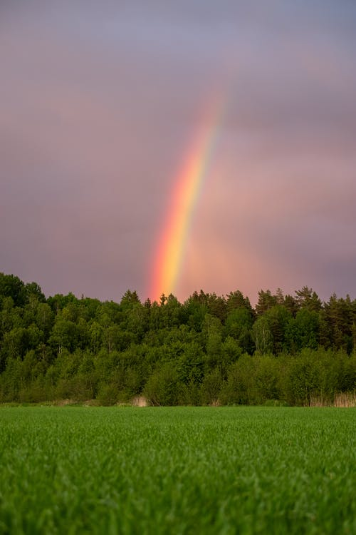 Bright rainbow shining over lush abundant trees and grassy lawn in overcast day
