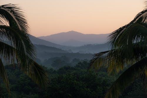 Green tropical trees growing on hills in sundown