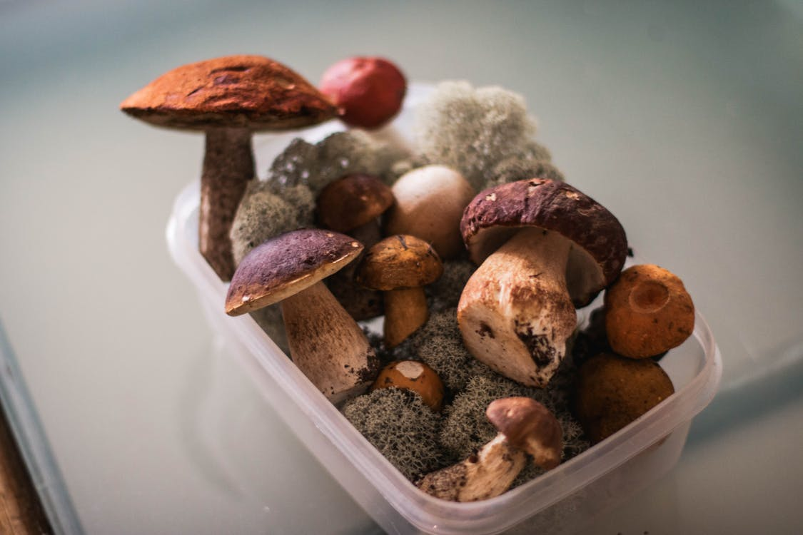 Bunch of fresh various mushrooms in plastic container on table