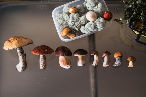 Row of different mushrooms and moss in container on table