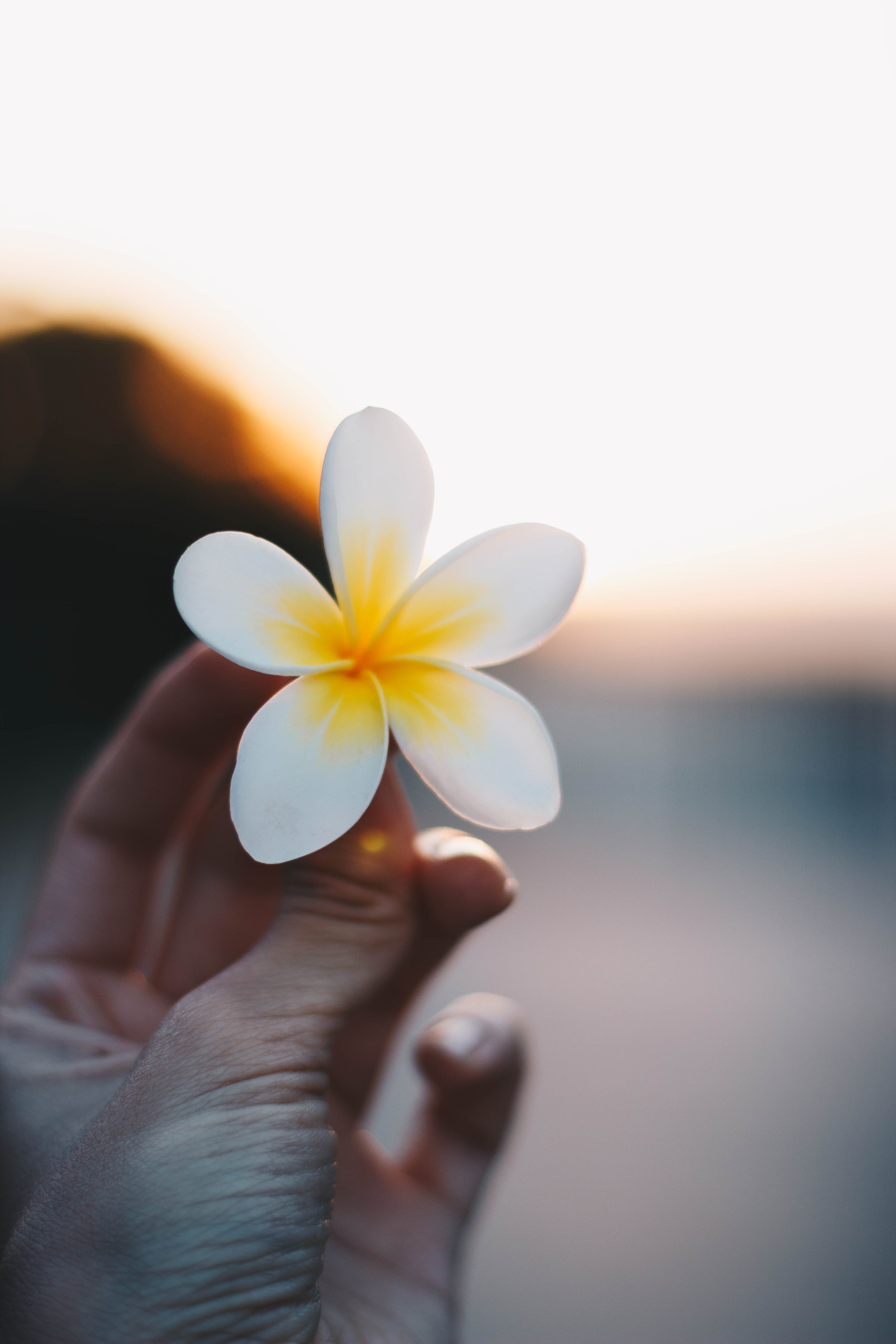 Close-up Photo of a Person Holding a Flower