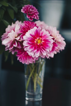 Pink Flowers on the Vase