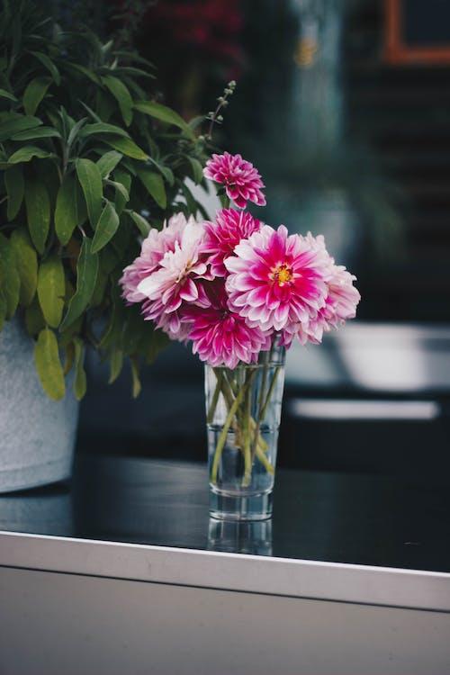 Ilmainen kuvapankkikuva tunnisteilla hauras, kasvikunta, koristelu, kukat
