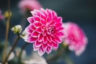 flowers, garden, petals