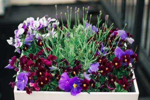 Gratis arkivbilde med anlegg, blomst, blomster, blomsterblad