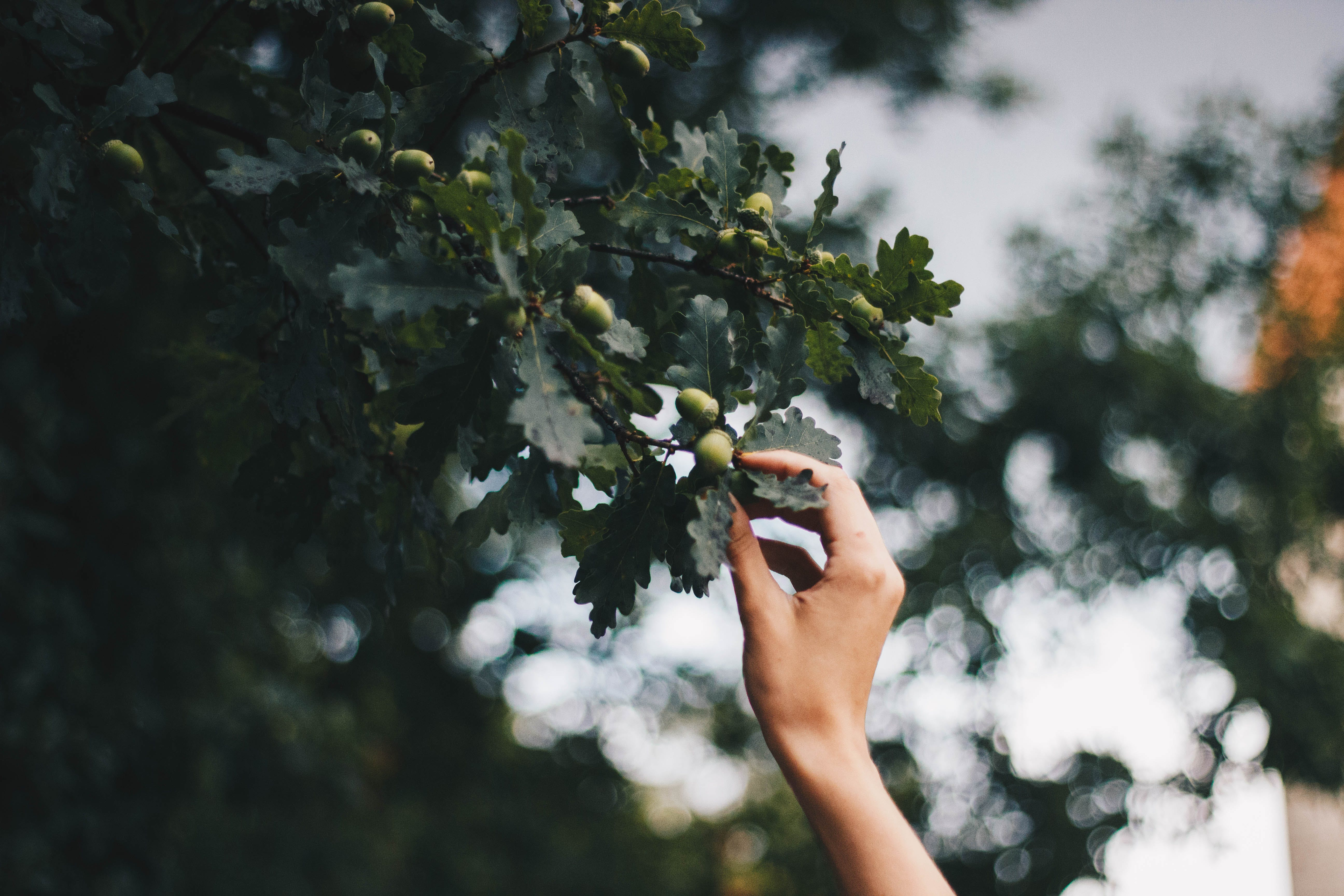 Person Holding Green Leafed Tree