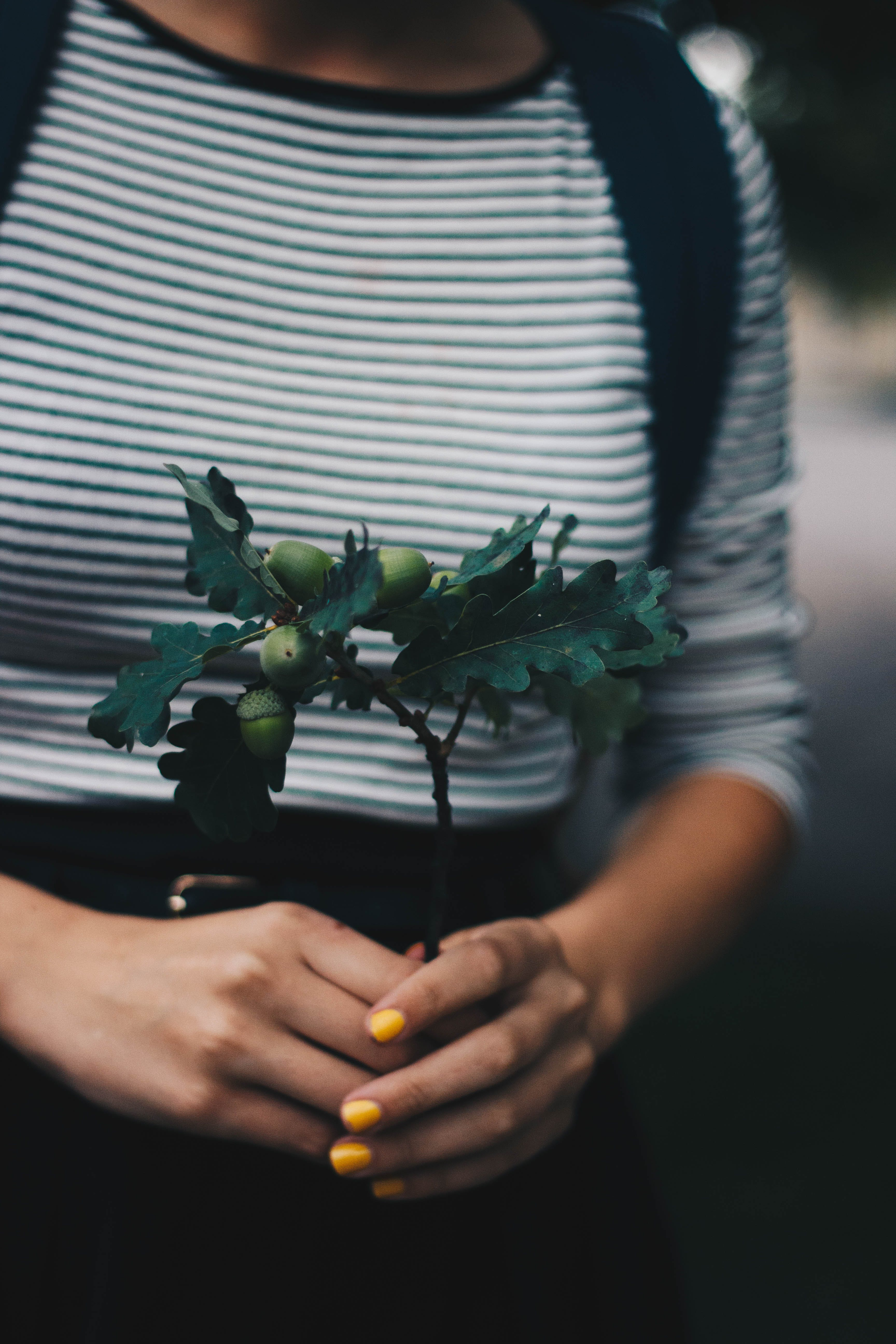 Selective Focus Photograph of Green Plant on Person's Hands