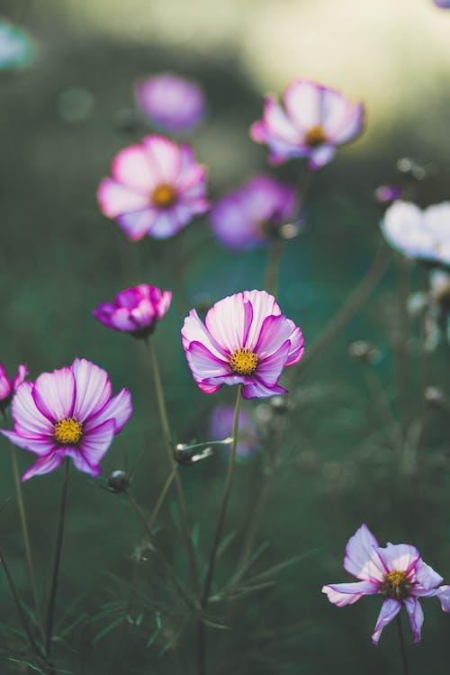 Darmowe zdjęcie z galerii z flora, głębia pola, kwiaty, kwitnąć