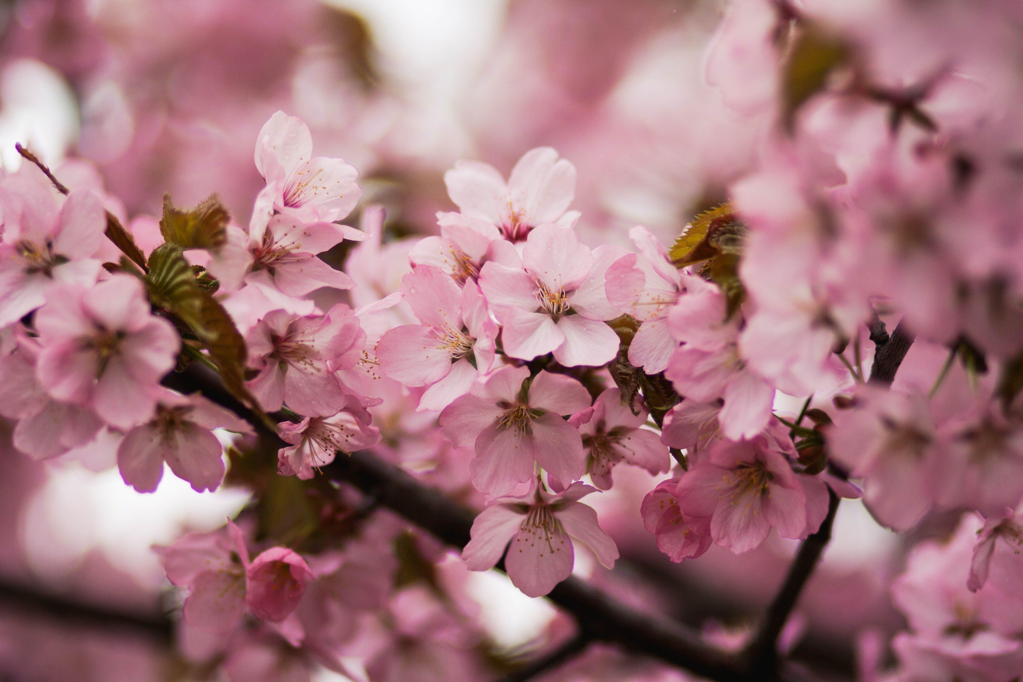 delikatny, drzewo, flora