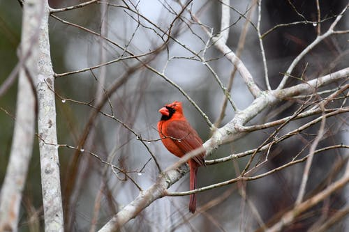 Imagine de stoc gratuită din animal, arbore, cădere