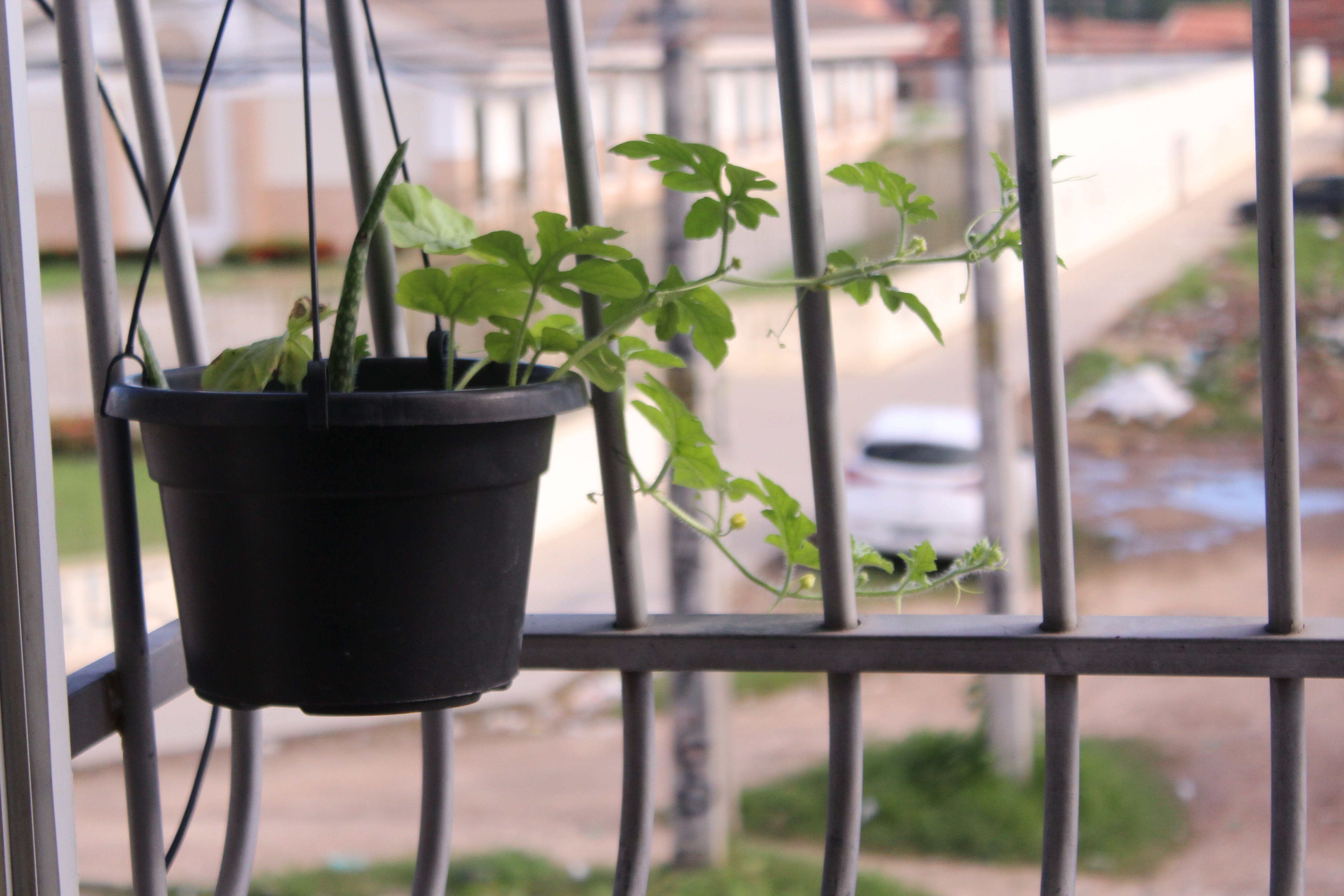 Free stock photo of jarro, nature, plant, window nature