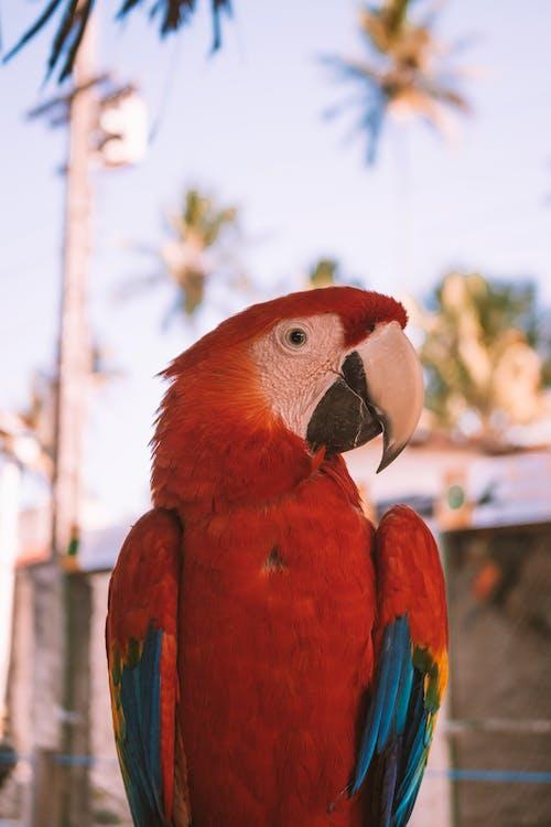 Amerika papağanı, gaga, hayvan içeren Ücretsiz stok fotoğraf
