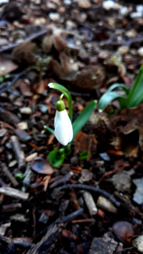 Ảnh lưu trữ miễn phí về đáng yêu, gỗ, hoa mùa xuân