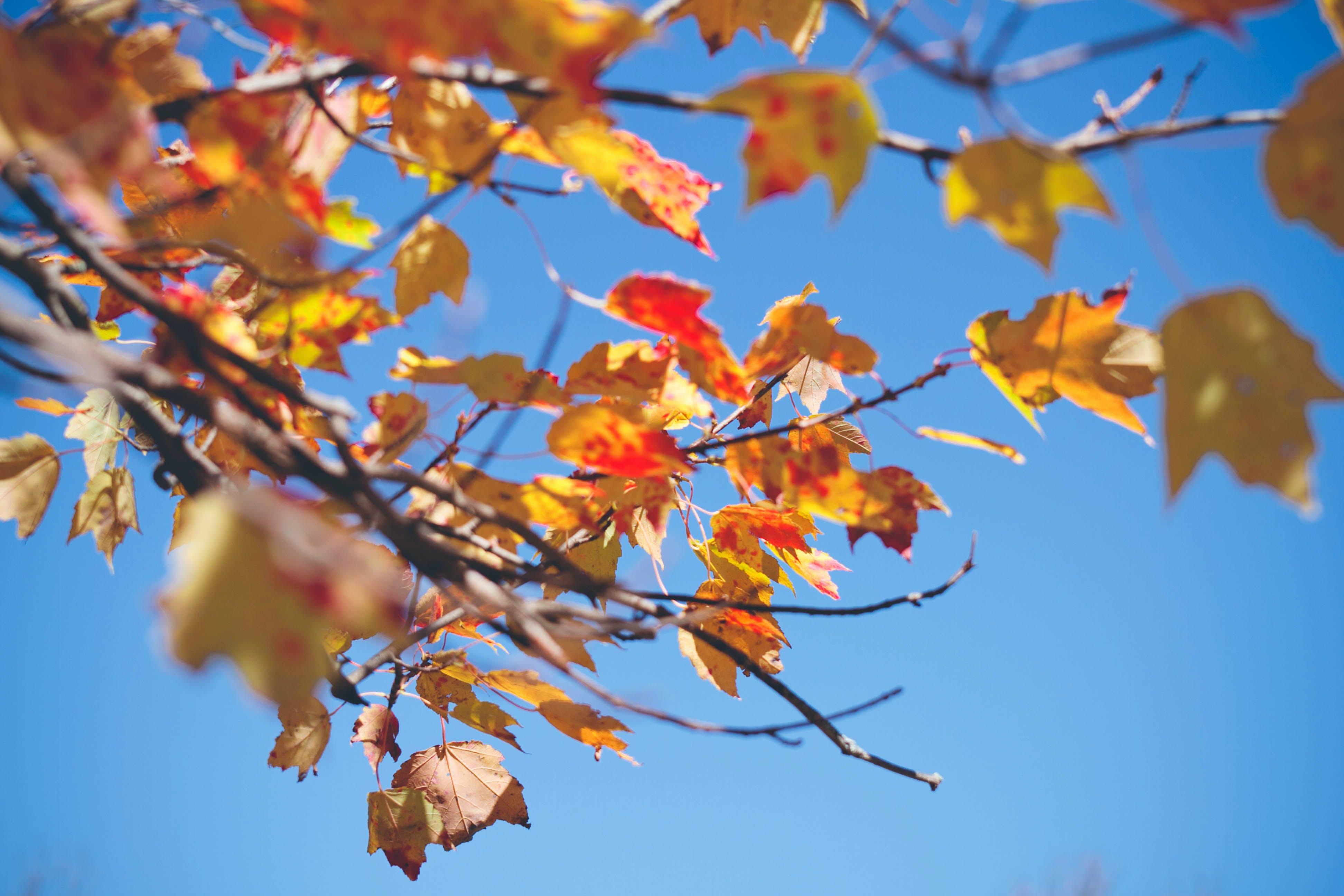 autumn, fall, leaves
