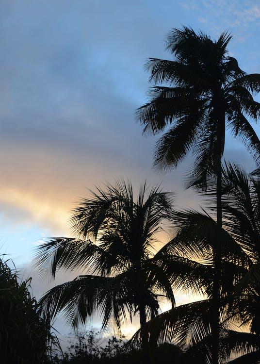 Foto profissional grátis de caribe, céu, pôr do sol