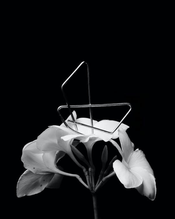 Základová fotografie zdarma na téma koncepční, motýl, motýl na kytce