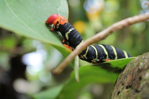 Free stock photo of bug, bugs, caterpillar
