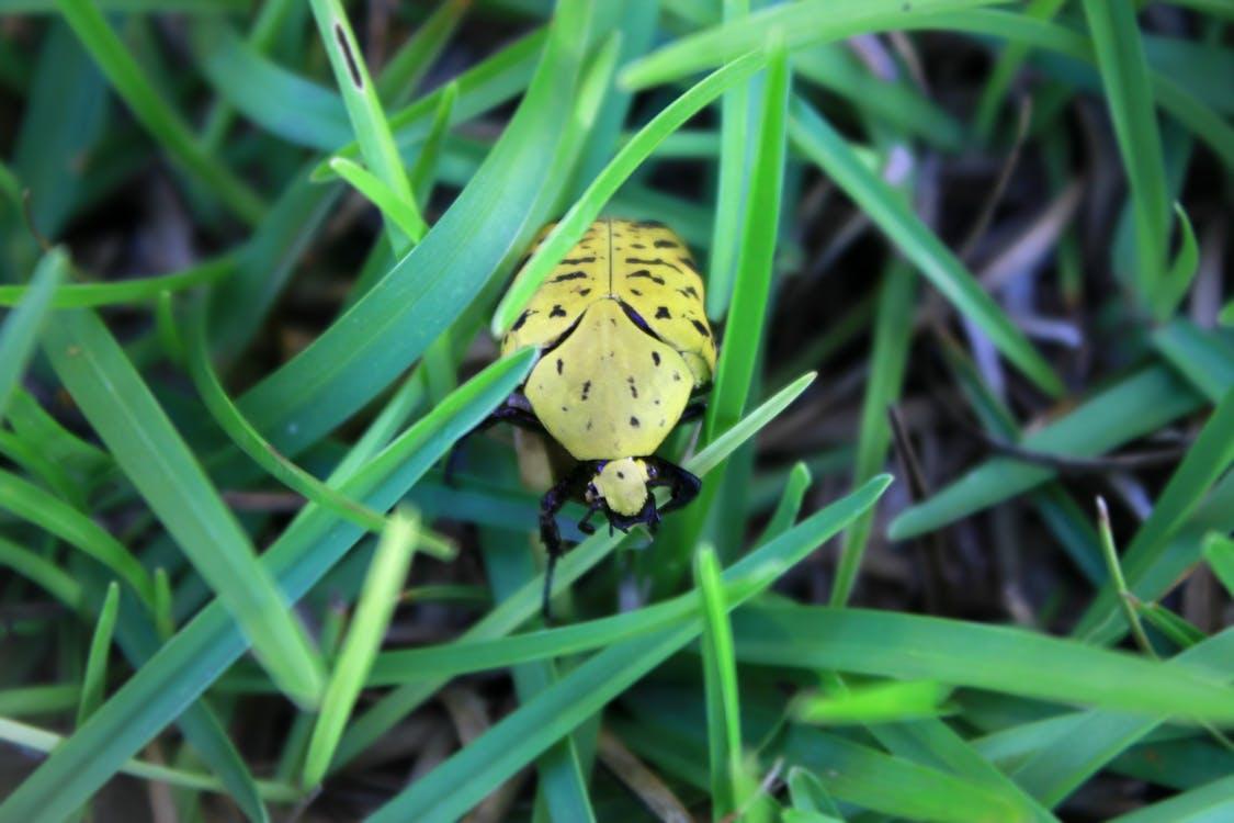 Free stock photo of bug, ladybug, macro