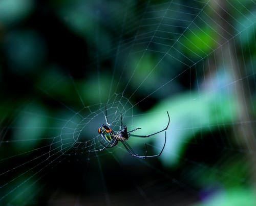 Free stock photo of bugs, insects, spider
