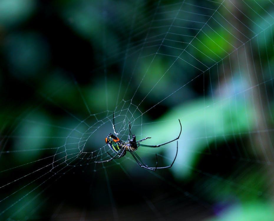 Základová fotografie zdarma na téma brouci, hmyz, pavoučí síť