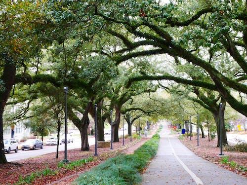 小徑, 樹, 步行街 的 免费素材图片
