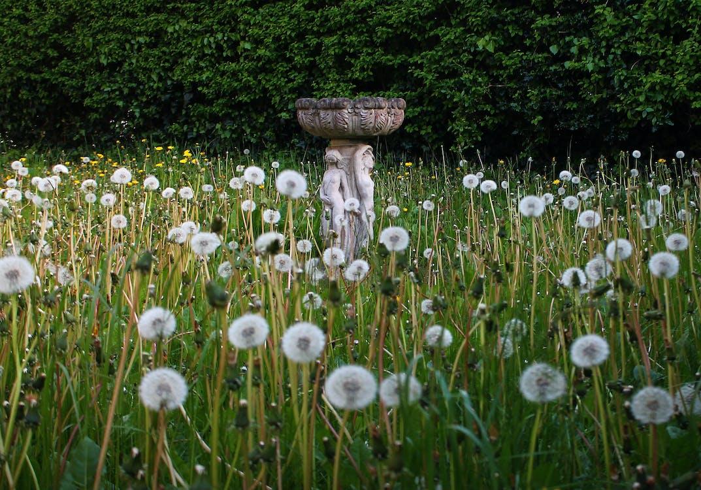 Základová fotografie zdarma na téma flóra, hřiště, kvést