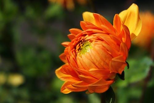 Orange Petaled Flower In Close-up Photography