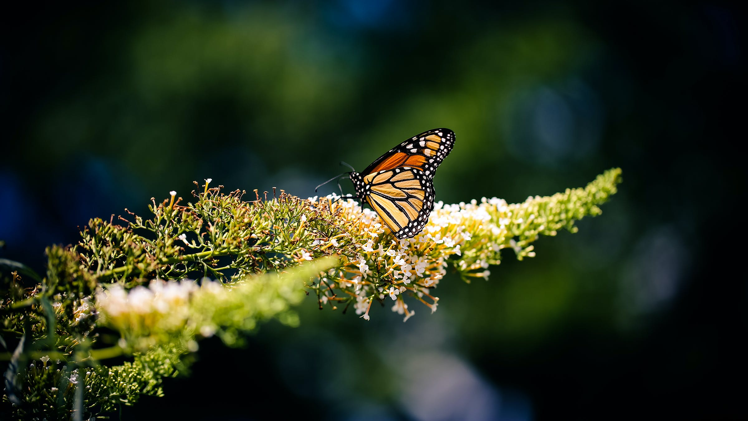 Free stock photo of nature, animal, insect, butterfly