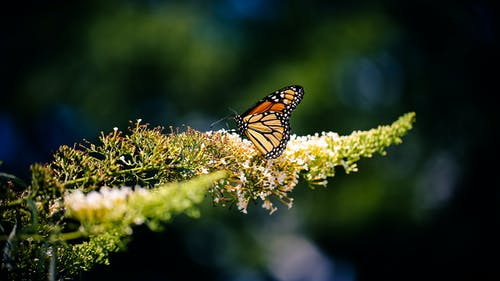 Selective Focus Photo of Monarch Butterfly on Yellow Plant