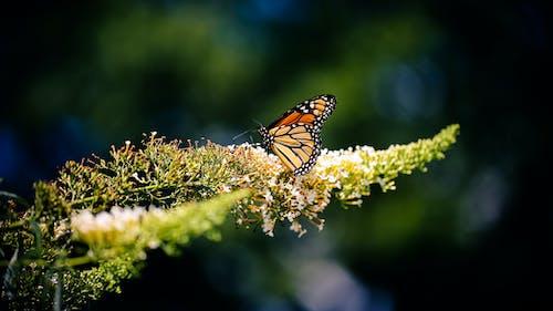 Ảnh lưu trữ miễn phí về Con bướm, côn trùng, con vật, loài vật