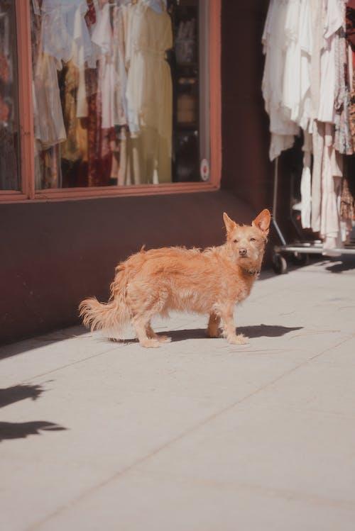 Brown Short Coated Medium Sized Dog Standing on White Floor Tiles