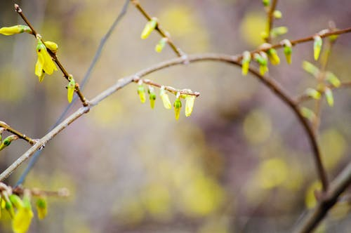 Free stock photo of flowering plant, wildflower, yellow flowers