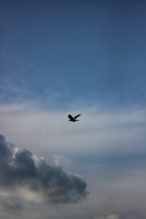 Foto profissional grátis de ave, aviário, avícola