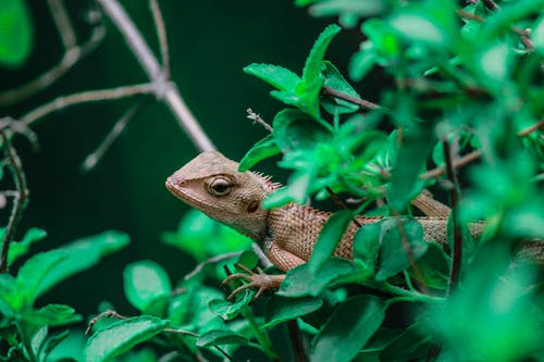 Brown and Black Lizard on Green Plant