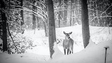 snow, nature, winter