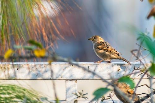 A Bird on the Metal Bar Fence