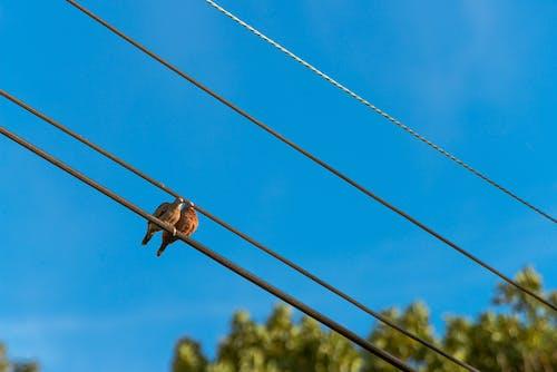 Photos gratuites de ciel, colombes, photo de nature