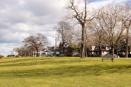 Ảnh lưu trữ miễn phí về Canada, cỏ, công viên, gió