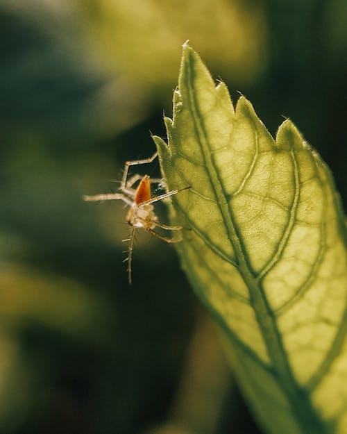 クモ, グリーンプラント, ぼかしの無料の写真素材
