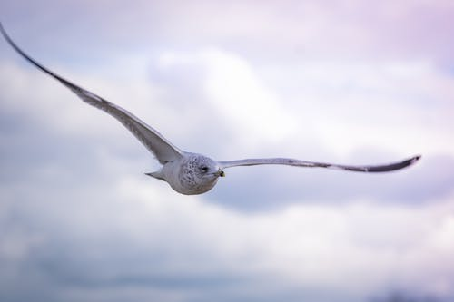 Ảnh lưu trữ miễn phí về bạch dương, bầu trời, hải âu
