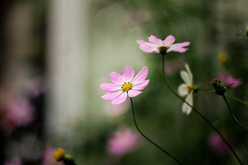 Безкоштовне стокове фото на тему «квіти, квітучий, розмитий фон»