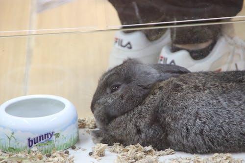 Fotos de stock gratuitas de animal, conejito, Conejo