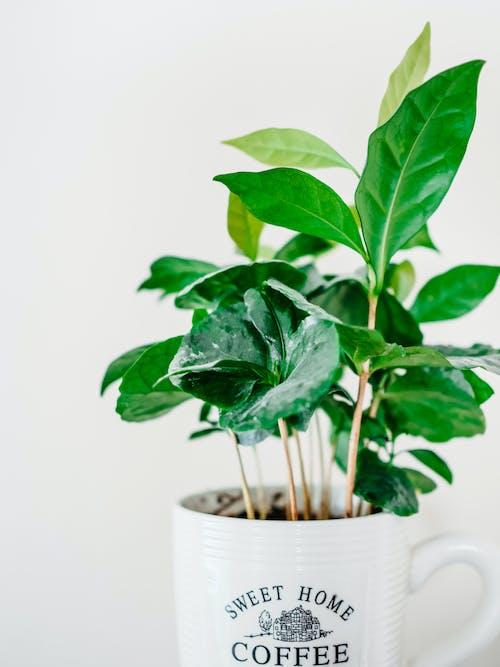 Green Plant on White Ceramic Mug