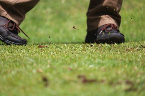 Fotos de stock gratuitas de conseguí la pelota de golf?