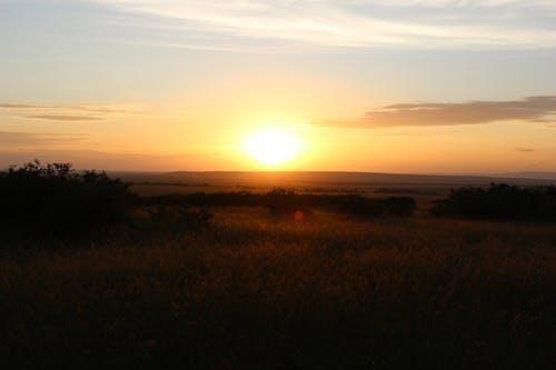 Free stock photo of Dusk at the Mara