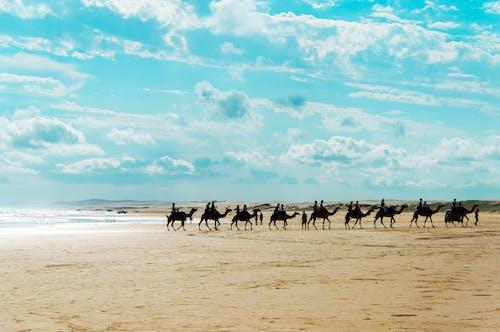 Free stock photo of anna bay, australia, beach