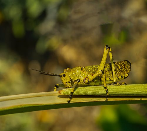 곤충, 곤충학, 동물의 무료 스톡 사진