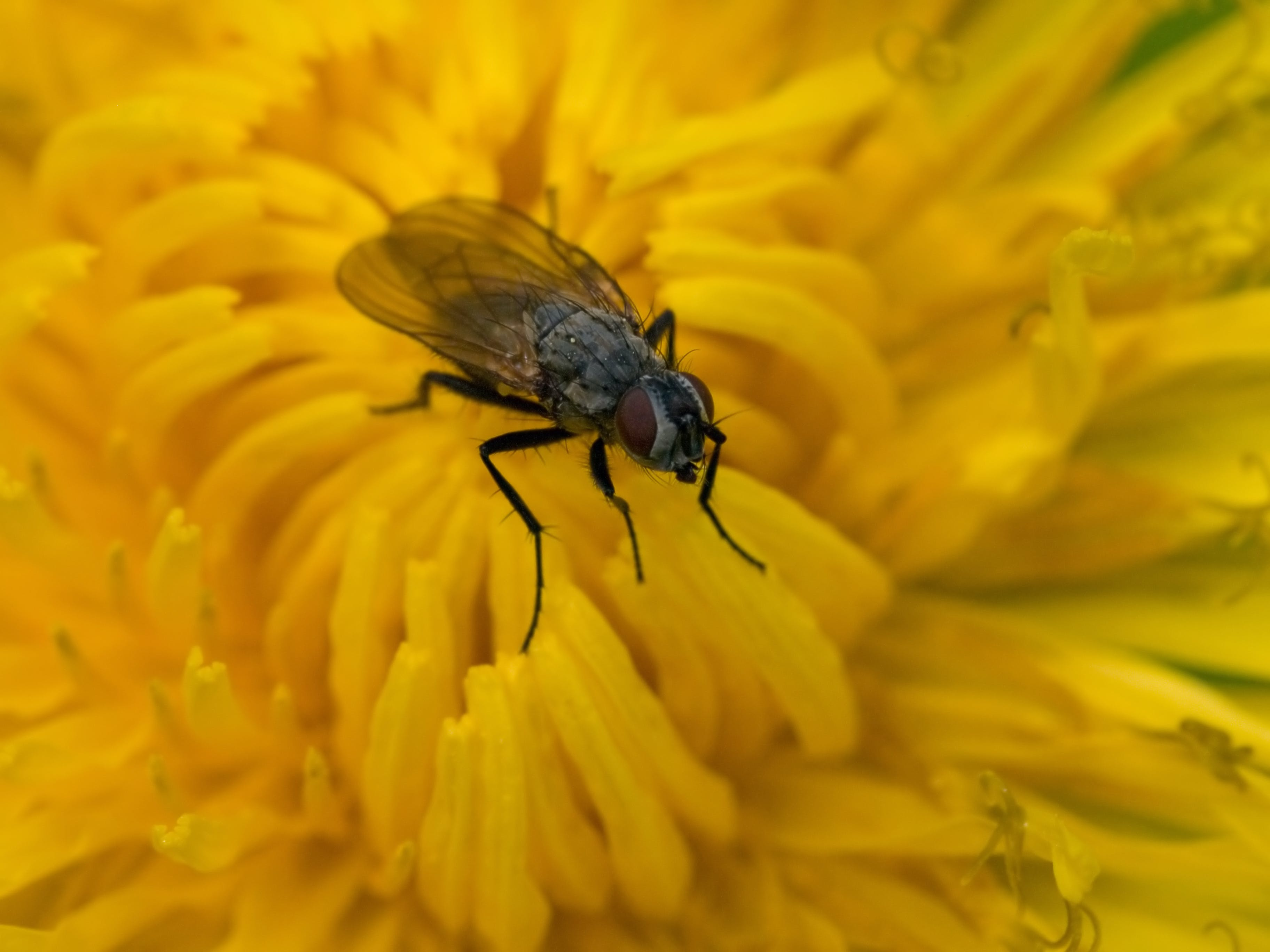 天性, 昆蟲, 植物群, 特寫 的 免费素材照片