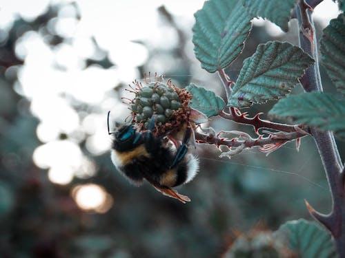 Ingyenes stockfotó abeja, abejorro, aire ingyenes témában